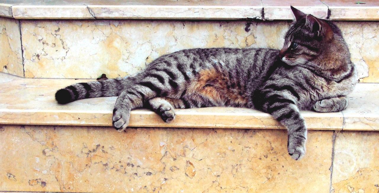mistico zen gatos